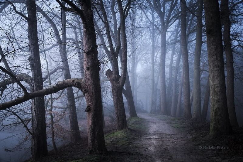 Photo Credit: Photograph by  Nelleke Pieters