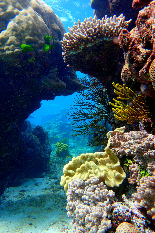 Fan coral between bommies