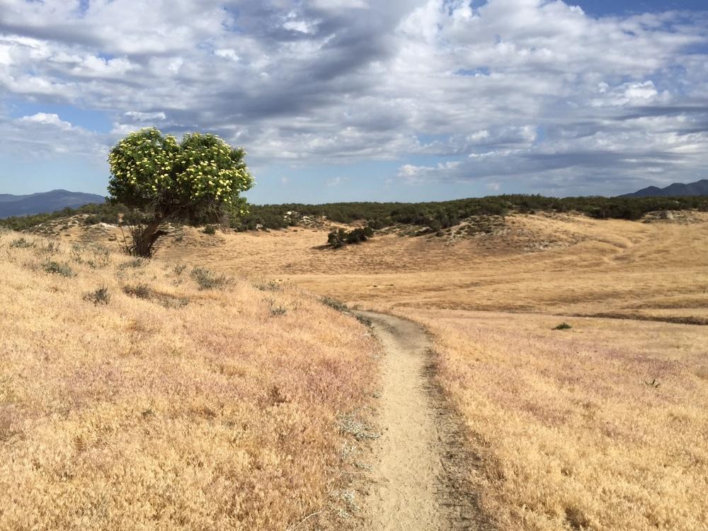 Warner Springs tree