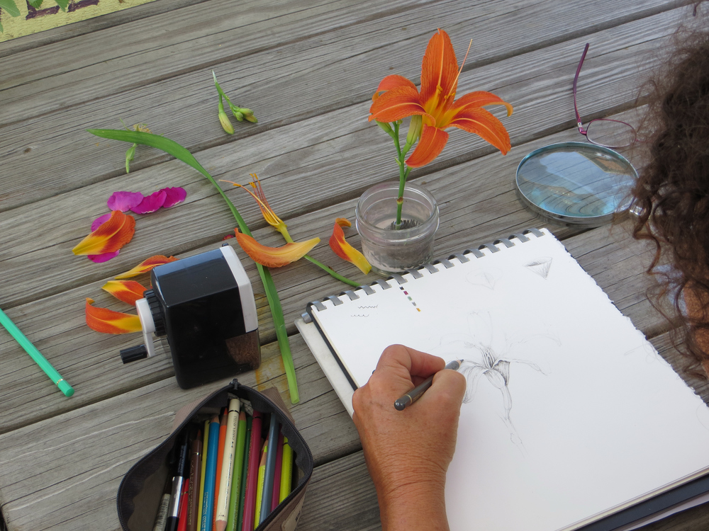 Wendy demonstrating drawing a Day Lily
