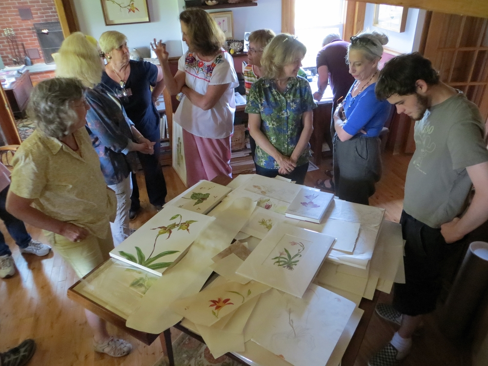 A tour of Botanical Artist Carol Woodin's studio where she paints on vellum