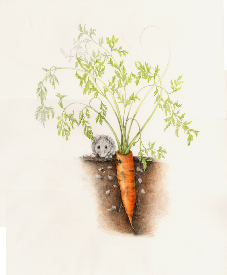 The mouse crunches on a carrot