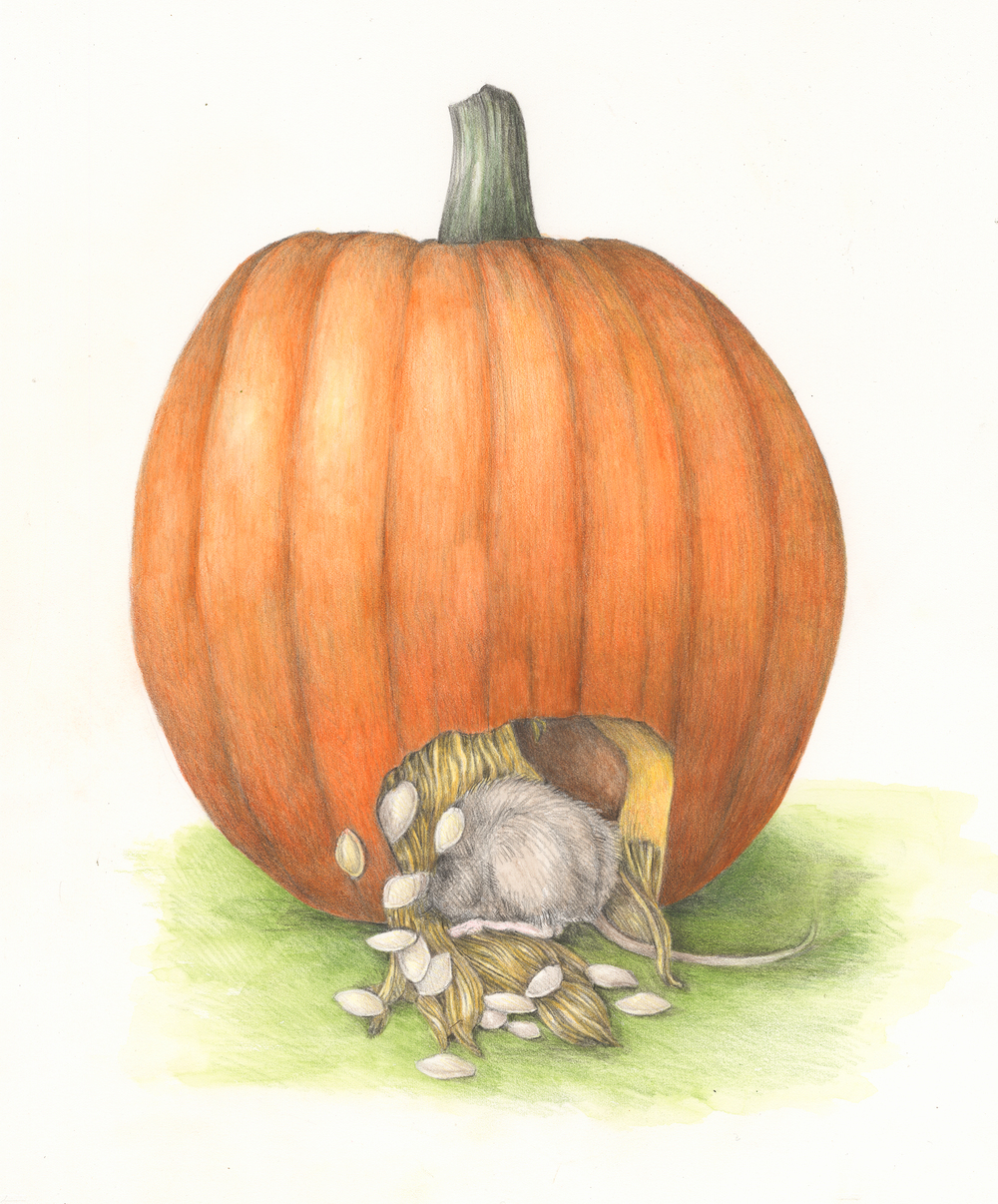 The mouse explores inside a pumpkin