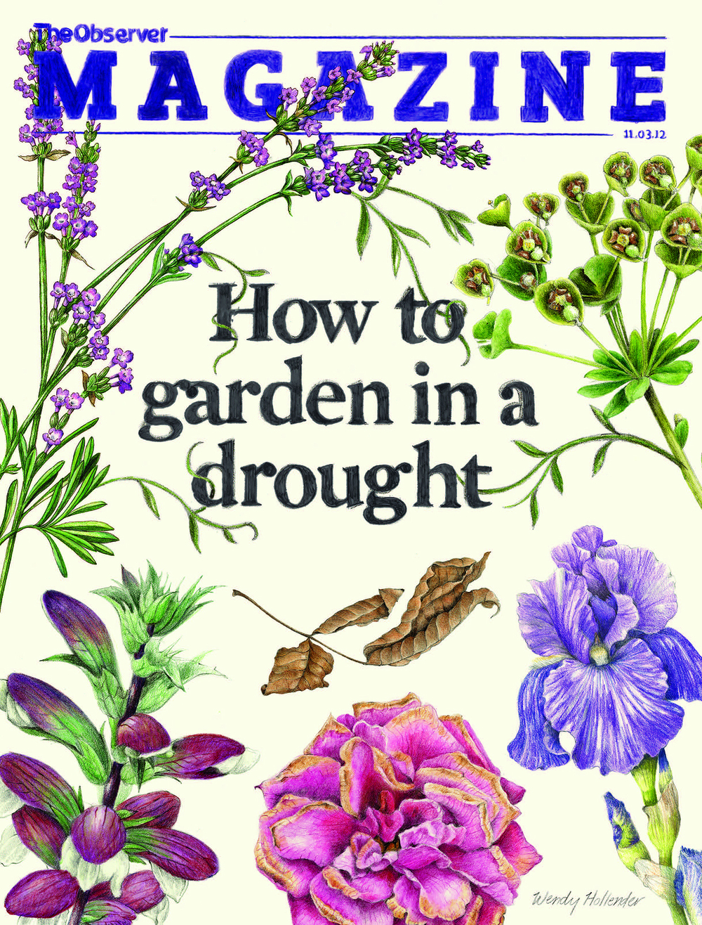OBSERVER MAGAZINE  March 2012 These illustrations were for the cover and inside spread of an article about plants used in gardening in a drought in England. Read the article  online .