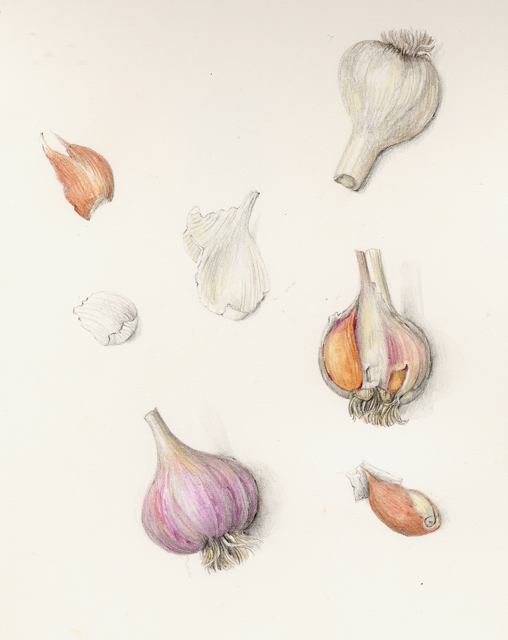 fruits amp vegetables gallery full � botanical artist