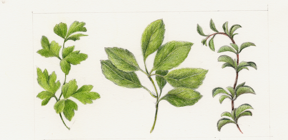 Parsley, Basil, Oregano
