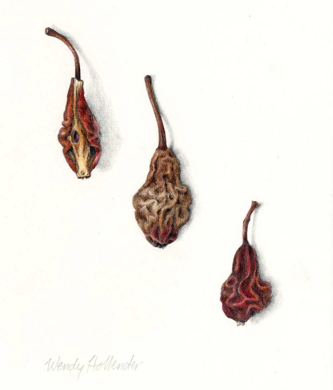 Pears, dried