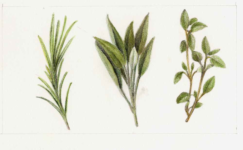 Rosemary, Sage, Oregano