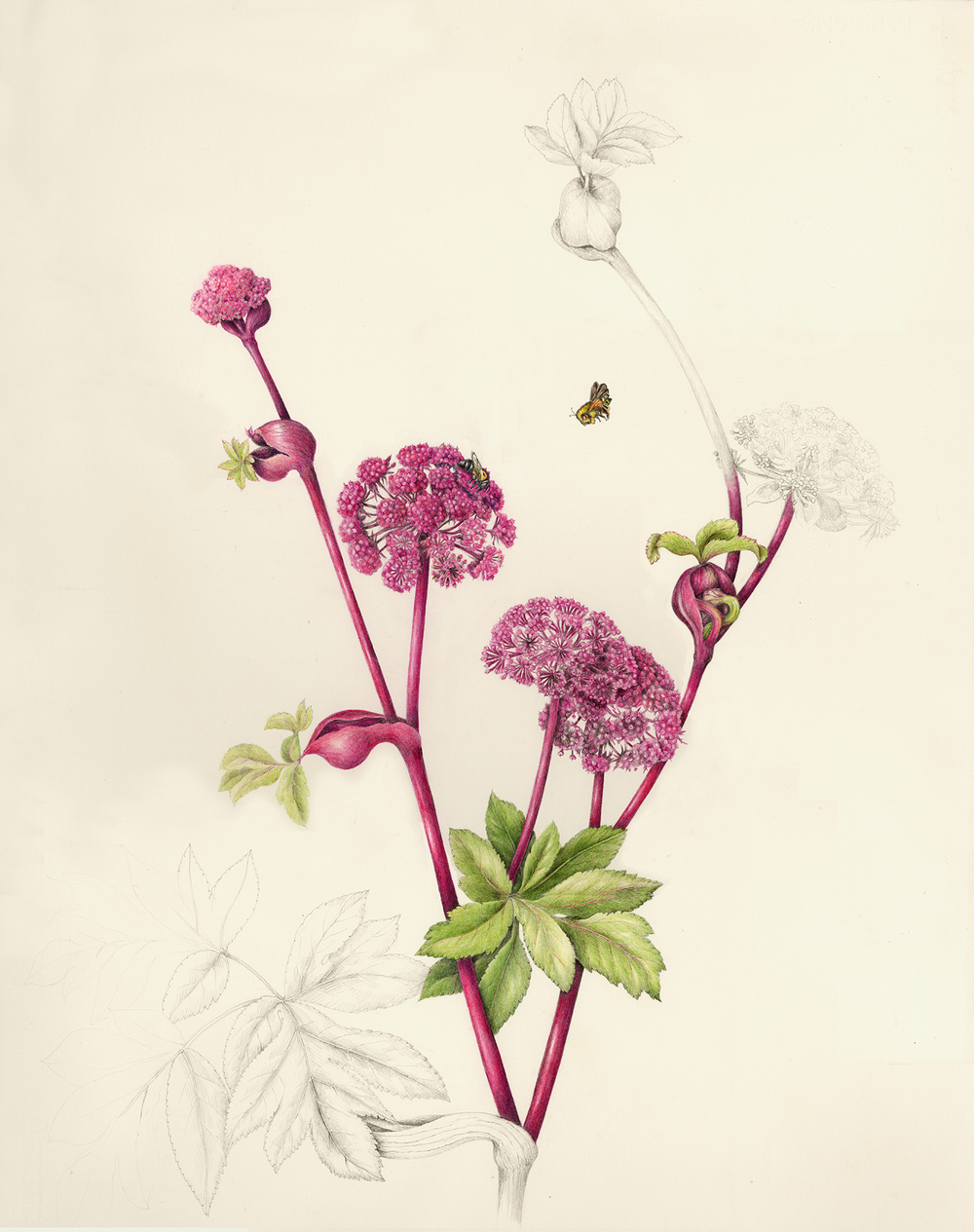 Flowers Gallery Botanical Artist Illustrator Learn To Draw Art