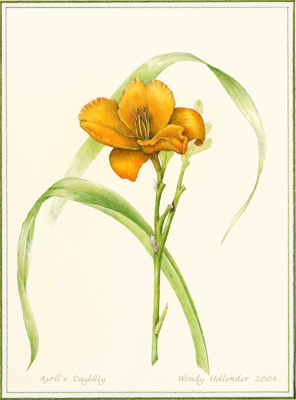 April's Daylily - Hemerocallis