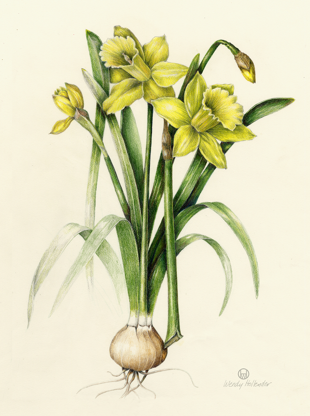 Flowers Gallery Full Botanical Artist Amp Illustrator