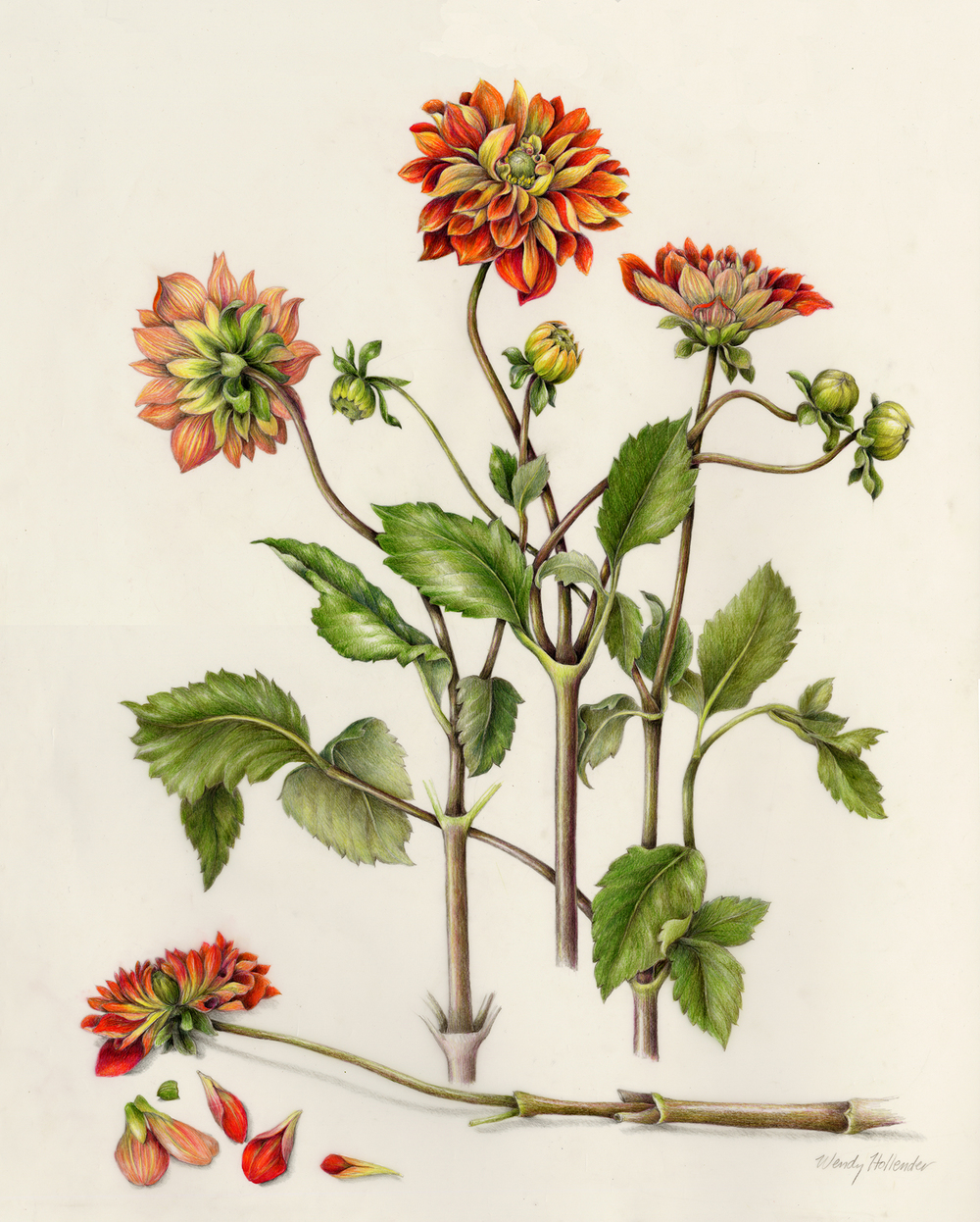 Flowers Gallery Full — Botanical Artist & Illustrator, Learn to draw ...