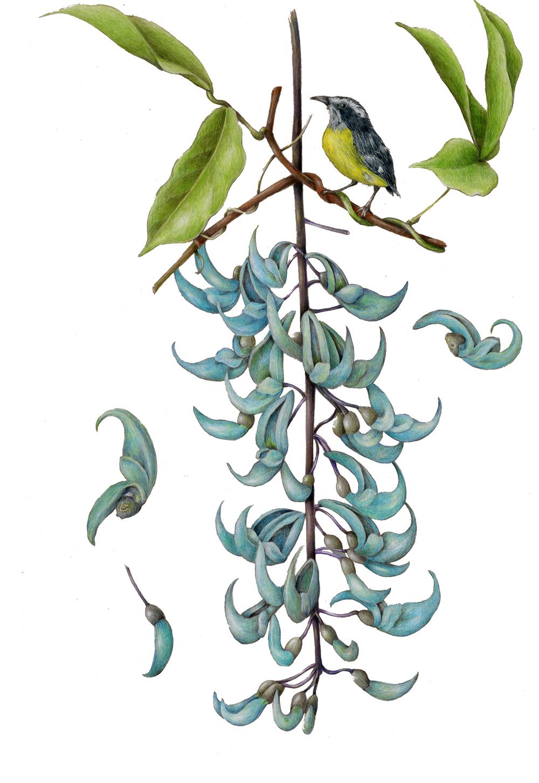 flowers gallery full  u2014 botanical artist  u0026 illustrator