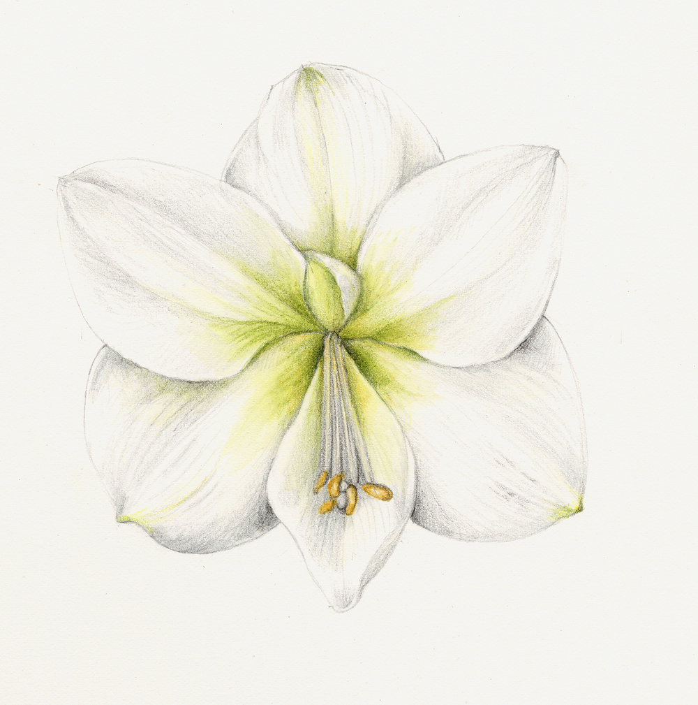 Flowers Botanical Artist Illustrator Learn To Draw Art Books