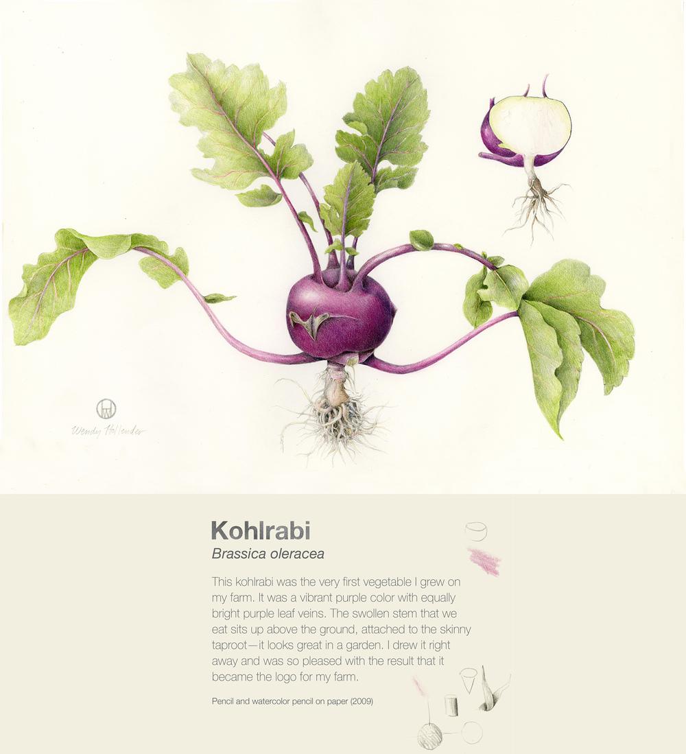 Kohlrabi - Brassica oleracea