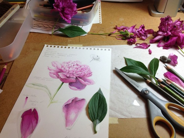 Drawing spring flowers new york ny botanical artist drawing spring flowers new york ny botanical artist illustrator learn to draw art books art supplies workshops mightylinksfo