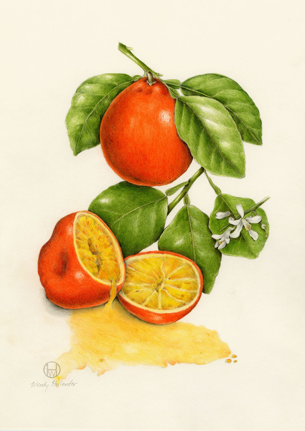 Tangelo - Citrus × tangelo