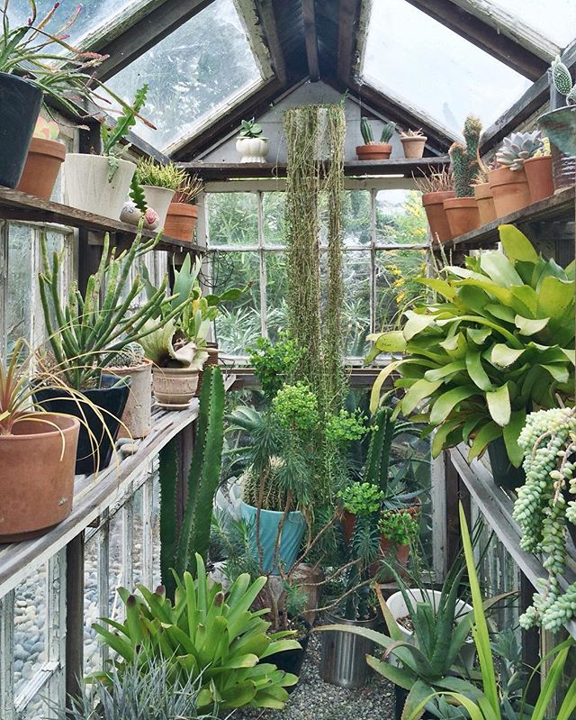 Tiny secret spaces. 🌱 - #tiny #greenhouse #secretgarden #horticulture #plants #sanctuary #greengoals #plantenvy #generalstore #sanfrancisco #california #sfo #ilovesf #californialove