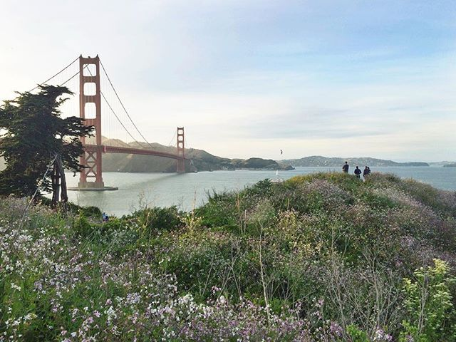 Going wild 🌾 - #rewilding #native #planting #habitat #nature #wild #landscape #greencity #citiesforpeople #goldengatebridge #sanfrancisco #california #sfo #ilovesf #californiadreaming #ileftmyheartinsanfrancisco
