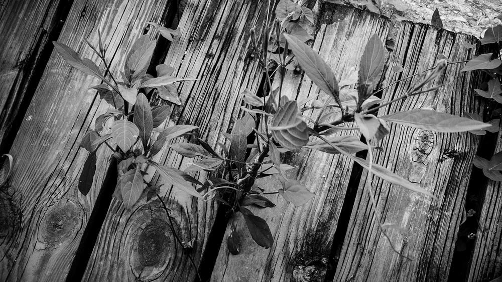 Bartlett-Weed-6165.jpg