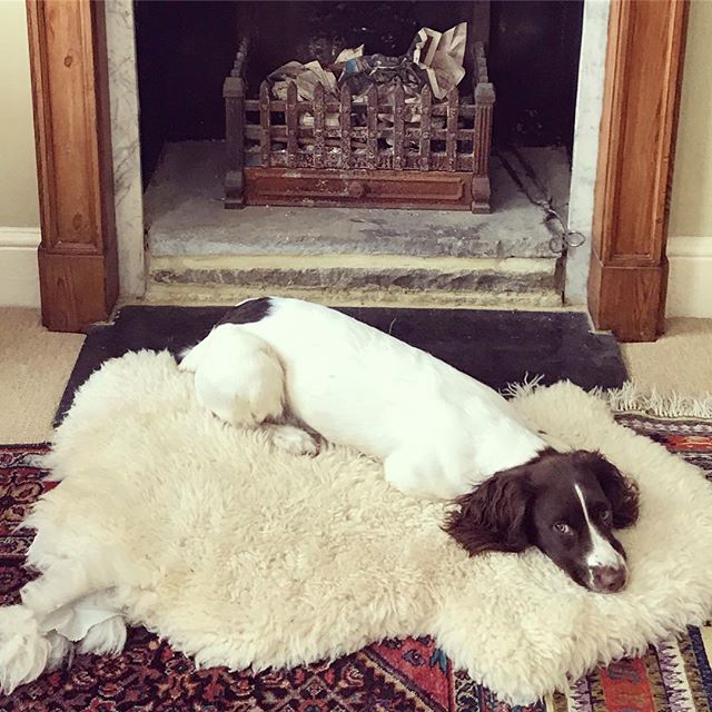 I can't even with this little one❤️❤️❤️🙈 #lunalove #doglife #countrylife #whoneedslondonlife? #workingfromhome #puppy