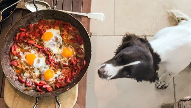 A very hopeful little Luna🐶🍳🙏 #dogswhobrunch #ladyluna #shakshuka #puppy #brunch #breakfast #ottolenghi
