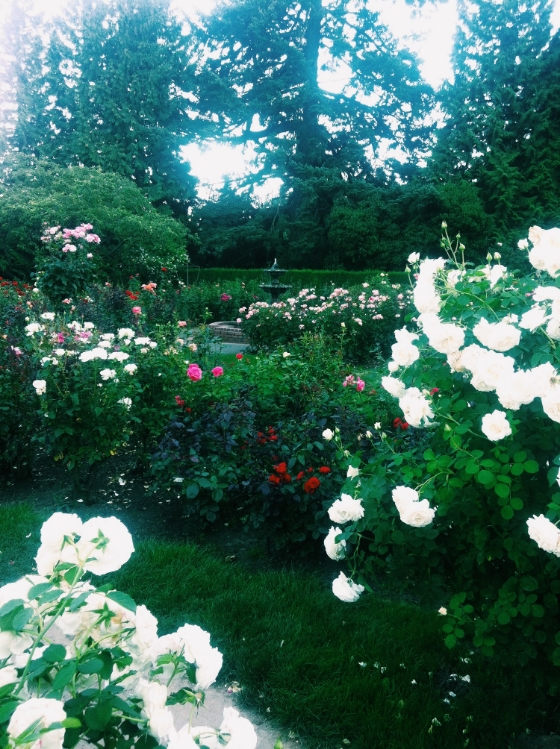 pdx rose garden 1.JPG