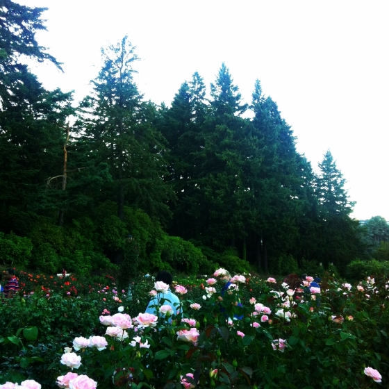 pdx rose garden 7.JPG