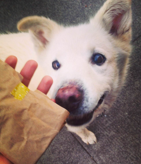Everybody becomes curiously friendly when you've got hand pies!