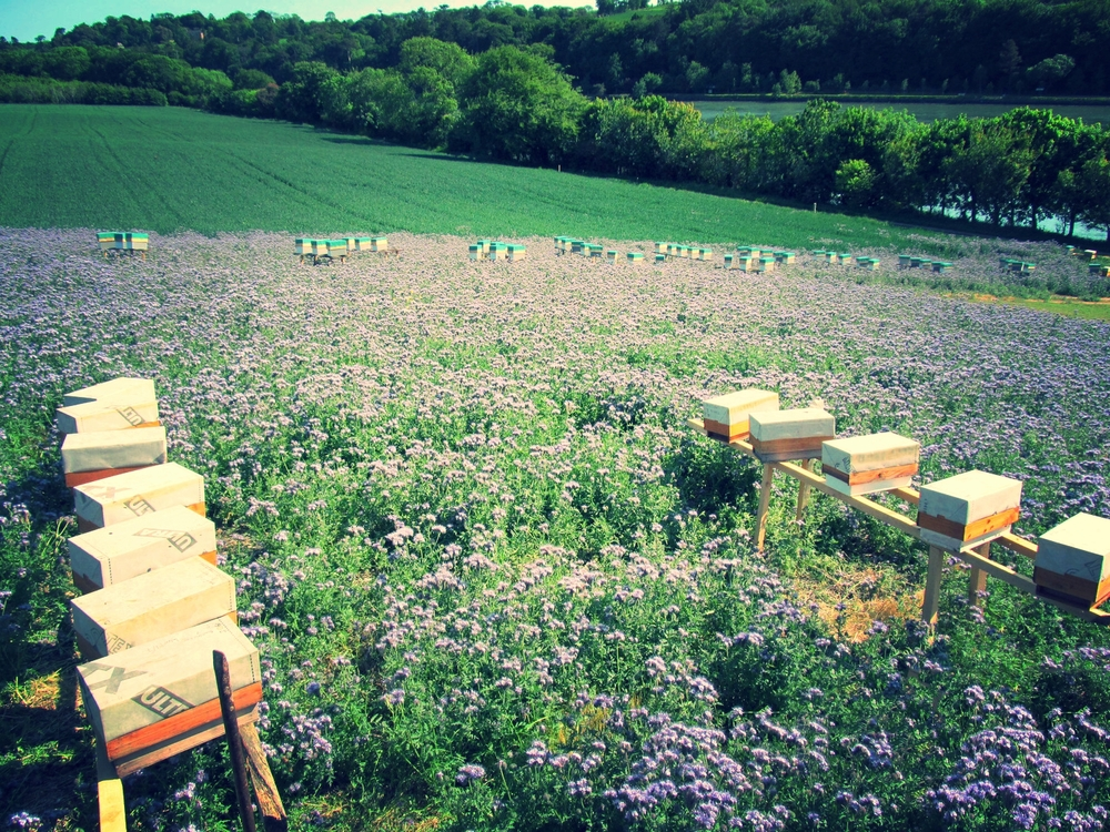 Overhead Shot - Hives in Field