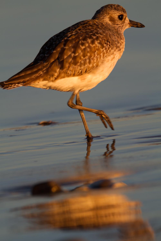 Bird_is_the_word.jpg