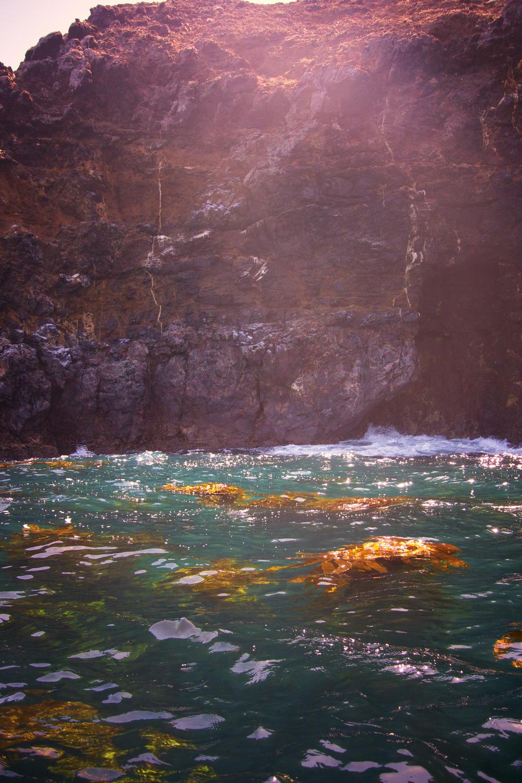 Cliffs_Kelp.jpg