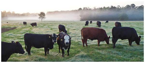 cowc.jpg
