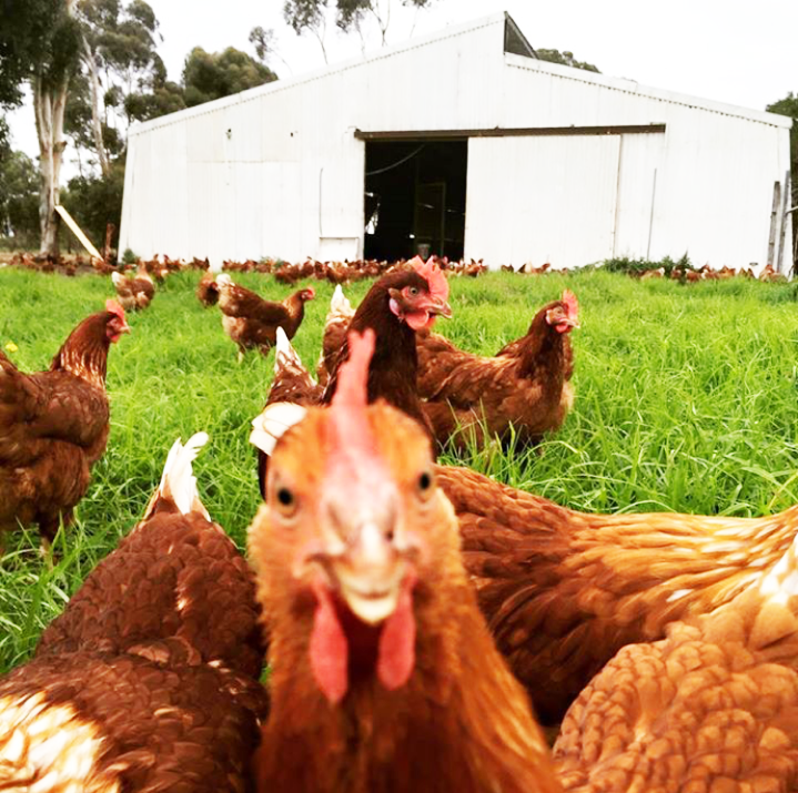 The girls from Esperance Eggs