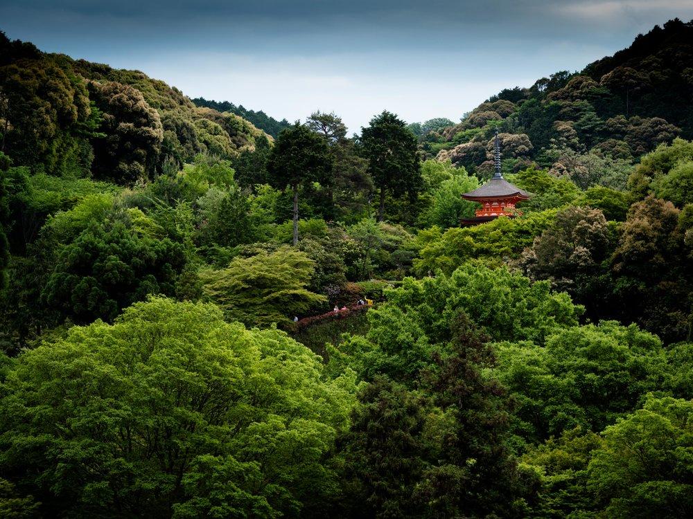 bill japan-1000497.jpg