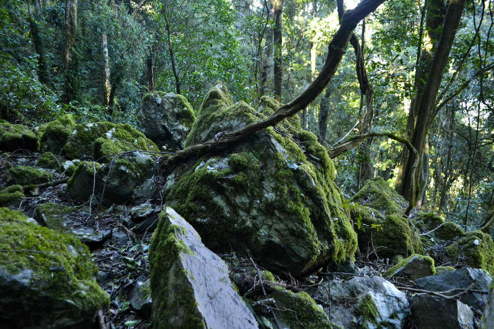 Mossy rocks Photo © Rebecca Boots