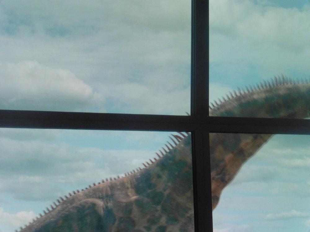2018-06-01 12.43.56dinosaurs.jpg