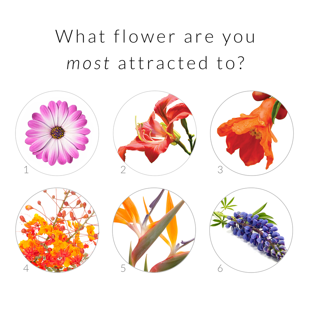 Flower Question1.jpg