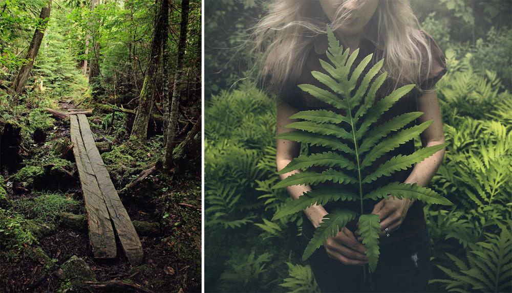 Susan Tuttle Photography