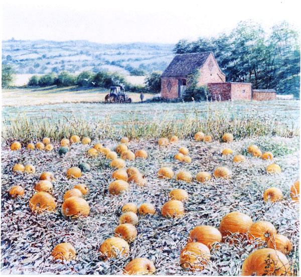 PumpkinField.jpg
