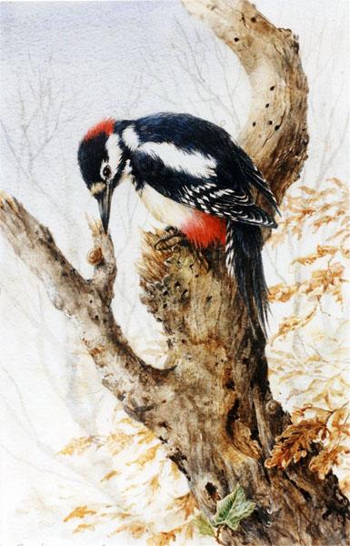 Woodpecker1.jpg