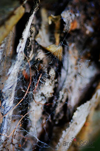 Spiderweb in log. Nikon D300 with Tamron 90mm macro. ISO400 1/160 @f4.5