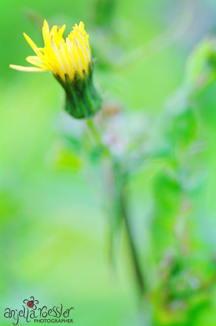 Lots of green and perfect exposure from metering the green. Nikon D300 with Tamron 90mm macro. ISO 400 1/160 @f4.5
