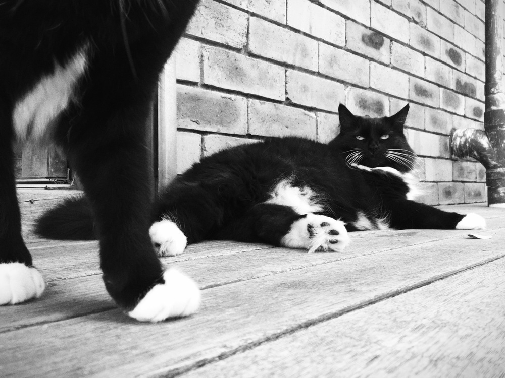 Jezebel and MiniKitty (legs). This is the end of cat photos for at least a week ;D