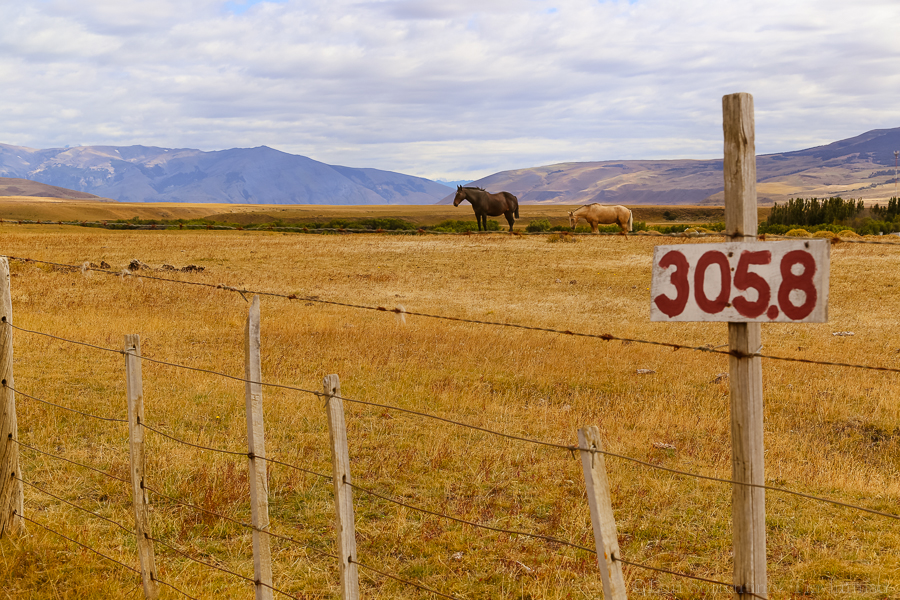 Horses grazing near Torres del Paine National Park.