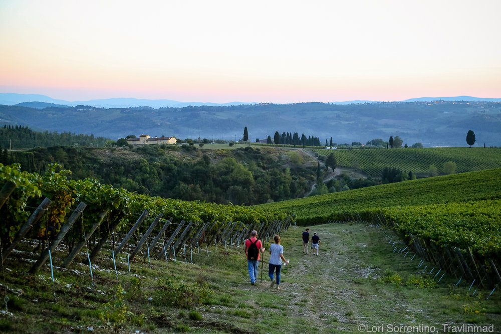 Vineyard hike, Chianti, Italy