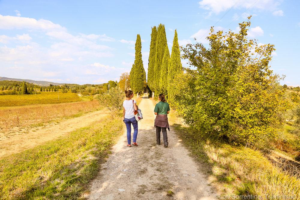 Pacina winery, Chianti, Italy