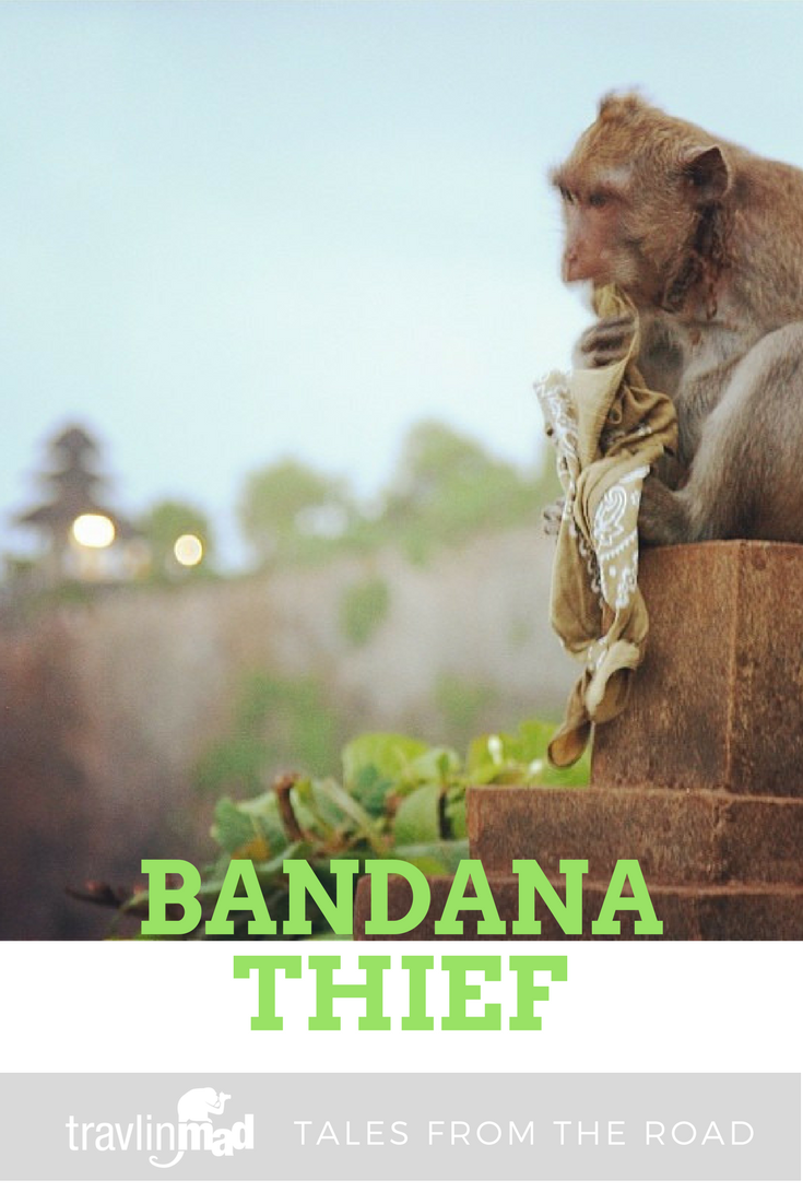 Macaque monkey, Bali