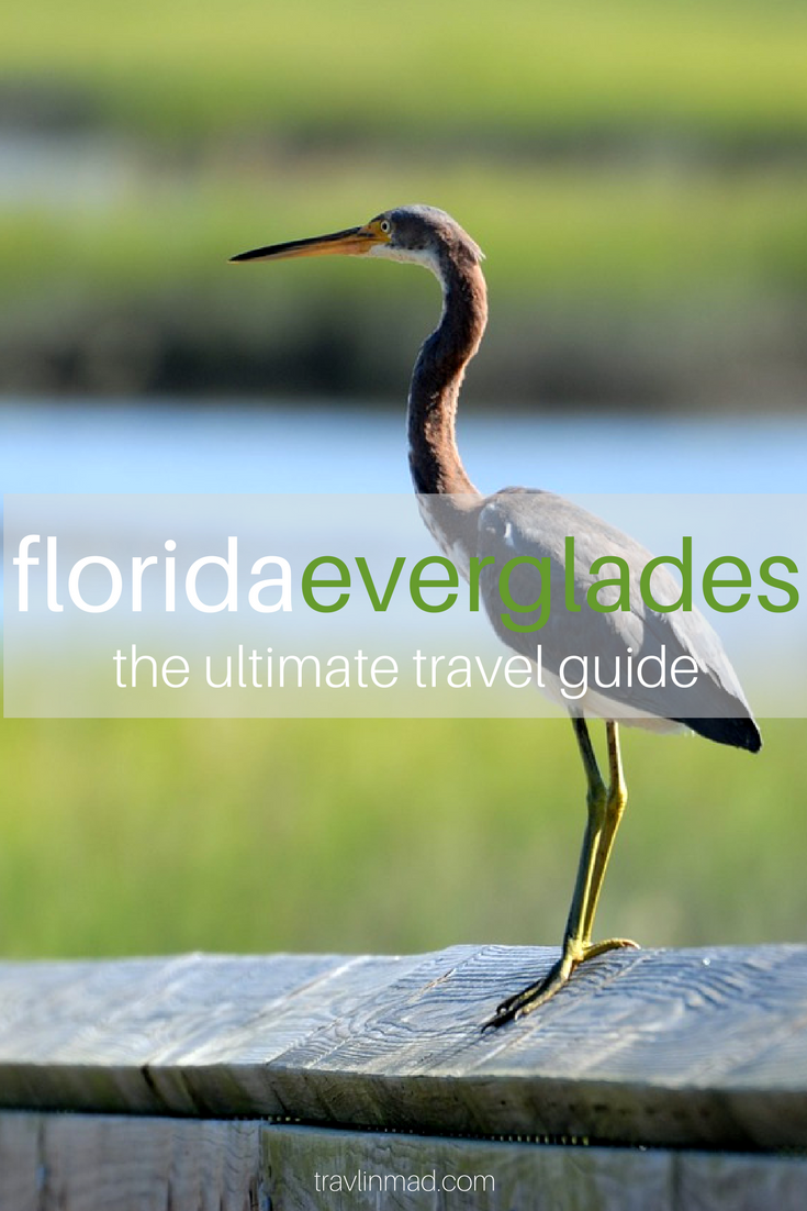 Awesome things to do in the Everglades