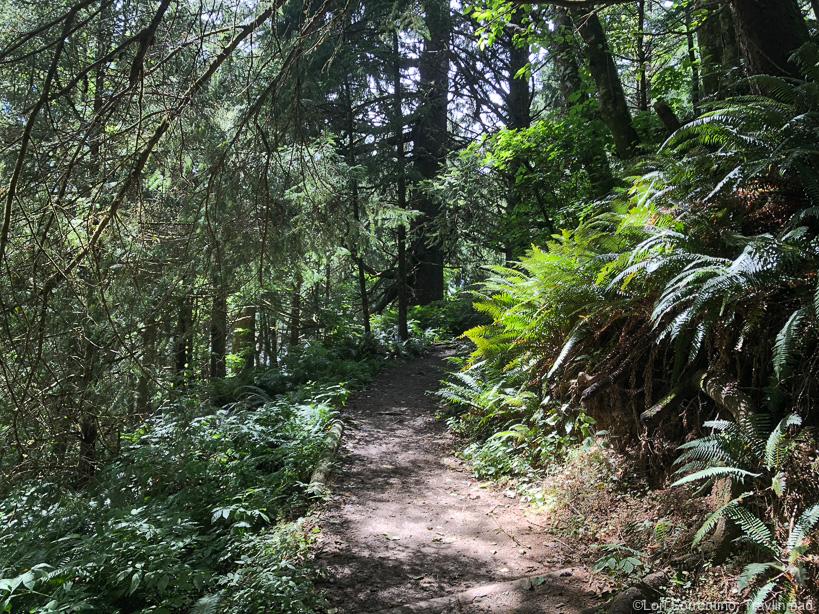 Flora along Ecola State Park, Oregon